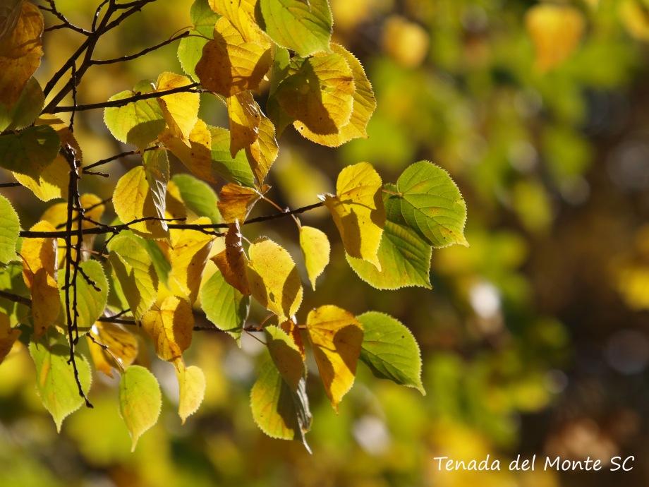 Segovia en otoño