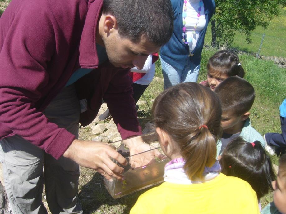 Taller de charcas en el colegio de Ortigosa del Monte